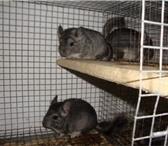 Фотография в Домашние животные Грызуны Представляем Вам САМЫЙ ВЫГОДНЫЙ БИЗНЕС на в Челябинске 0