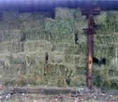 Фото в Домашние животные Растения Продаю сено луговое, разнотравье тюк квадратный. в Барнауле 70