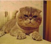Фото в Домашние животные Вязка Молодой кот приглашает в гости  леди.Немного в Нижнем Новгороде 0