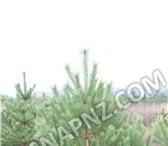 Foto в Домашние животные Растения При заказе у нас Вы получаете: Качественные в Махачкале 95
