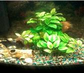 Фото в Домашние животные Разное Продам аквариум на 120 литров jebo с тумбой,рыбами в Новокузнецке 8000
