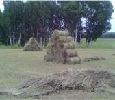 Изображение в Домашние животные Корм для животных продам сено в тюках по 25-30кг свежий укос2014г в Красноярске 120
