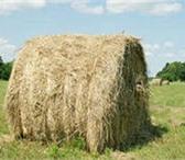 Фотография в Домашние животные Товары для животных продам сено в рулонах по 200кг, само вывоз, в Нижнем Тагиле 500