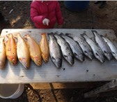 Изображение в Хобби и увлечения Рыбалка Flying-fish club г. Химки, квартал «Клязьма», в Москве 0