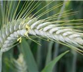 Фотография в Домашние животные Растения ООО «КУБАНЬ АГРО» предлагает к реализации в Краснодаре 14