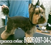 Foto в Домашние животные Услуги для животных Стрижка собак всех пород ( йорки   пудели в Москве 1