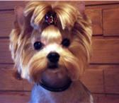 Foto в Домашние животные Стрижка собак Стрижка собак различных пород на дому. Опыт в Калуге 1000