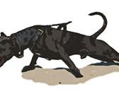 Фотография в Домашние животные Услуги для животных Учебно-дрессировочная площадка предлагает в Тамбове 0