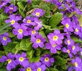 Фото в Хобби и увлечения Разное продаю цветы домашние в плошках и без.Цена в Россошь 50