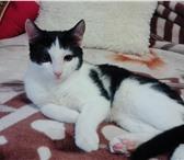 Фотография в Домашние животные Отдам даром котенок мальчик 5 месяцевкошка 1,5 года не в Казани 0