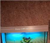 Фотография в Домашние животные Рыбки Изготовлю аквариум по вашим размерам. От в Тюмени 0