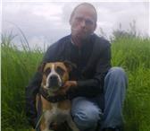 Изображение в Домашние животные Вязка собак приведу собаку на случку красивую сучку в Великом Новгороде 1000