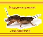Изображение в Красота и здоровье Товары для здоровья Акция! Цена - 500 рублей за курс! Цена без в Махачкале 500