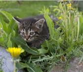 Фотография в Домашние животные Отдам даром я котёнок, хвост пушистыйя умею бегать быстроя в Улан-Удэ 0
