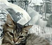 Фотография в Домашние животные Отдам даром Отдам милого котёнка в добрые руки! Нашла в Омске 0