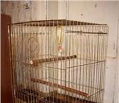 Фотография в Домашние животные Товары для животных Продам клетку для попугая в отличном состоянии. в Москве 1300