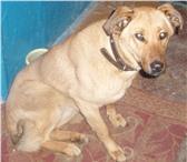 Фотография в Домашние животные Найденные Найдена собака 24.01.2011 в районе Гостинного в Уфе 0