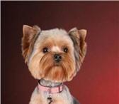 Изображение в Домашние животные Услуги для животных Опытный парикмахер приедет к Вам на дом (Строгино, в Москве 1300