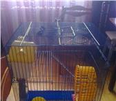 Фото в Домашние животные Товары для животных СРОЧНО! СРОЧНО! СРОЧНО!Продам трёхэтажную в Архангельске 800