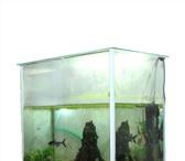 Фотография в Домашние животные Рыбки Оборудован, с тумбочкой 160 литров в Москве 7000