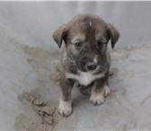 Фотография в Домашние животные Приму в дар Отдам щенят в добрые руки. Вырастут хорошими в Самаре 0