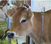 Фотография в Домашние животные Корм для животных Продаю корма для с/х животных и птицы. В в Москве 0