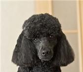 Изображение в Домашние животные Услуги для животных Предлагаю услуги по груммингу (стрижка, тримминг, в Костроме 700