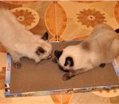 Foto в Домашние животные Товары для животных 7 причин купить когтеточку-лежанку сегодня! в Петрозаводске 300