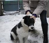 Изображение в Домашние животные Отдам даром Берта - подросток 9 месяцев. Очень послушна, в Новосибирске 0