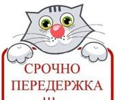 Изображение в Домашние животные Услуги для животных Возьму все хлопоты на себя за Вашим любимцем в Нижнем Новгороде 50
