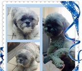 Foto в Help! Находки Найдена собака в районе Галереи ( ул Северная в Краснодаре 0
