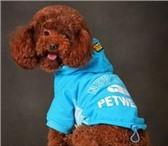 Фотография в Домашние животные Товары для животных Одежда и аксессуары для собак  Наложенным в Магнитогорске 0