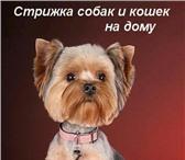 Foto в Домашние животные Стрижка собак Профессиональная стрижка собак и кошек любых в Санкт-Петербурге 1500