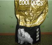 Изображение в Домашние животные Корм для животных Сухой корм для собак г  ЗлатоустПродам сухой в Златоусте 0