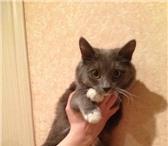 Фотография в Домашние животные Потерянные Найдена миниатюрная  кошка. Молоденькая. в Кирове 0