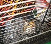 Изображение в Домашние животные Грызуны Отдам в хорошие руки маленького,  симпатичного в Владивостоке 200