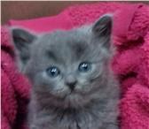 Продается котенок 1, 5 месяцев  (мальчик) 4390011 Уральский рекс фото в Нижнем Новгороде