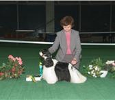 Фотография в Домашние животные Стрижка собак Опытный парикмахер приедет к вам на дом в в Москве 1000