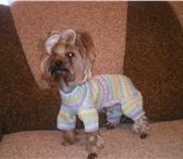 Foto в Домашние животные Товары для животных Шью   вяжу оригинальные вещи на собачек мелких в Дубна 500