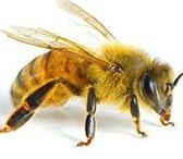 Foto в Домашние животные Разное продаю перезимовавшие пчелинные семья с молодыми в Кургане 6000